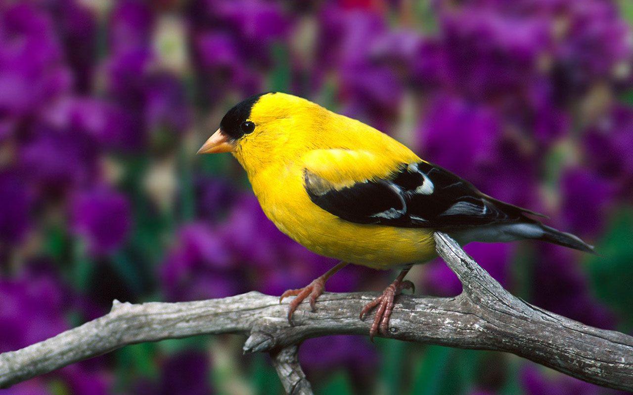 Pin By Emma Mattson On Animals Beautiful Bird Wallpaper