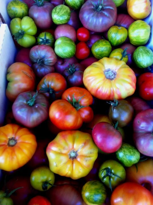 Beautiful heirloom tomatoes from Ollin Farms in Longmont, CO.