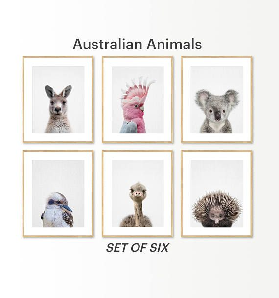 Australian Animal Print Nursery Animals Baby Koala Emu Echidna Kangaroo Kookaburra Pinterest