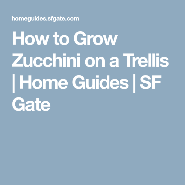 Growing Zucchini On A Trellis: How To Grow Zucchini On A Trellis
