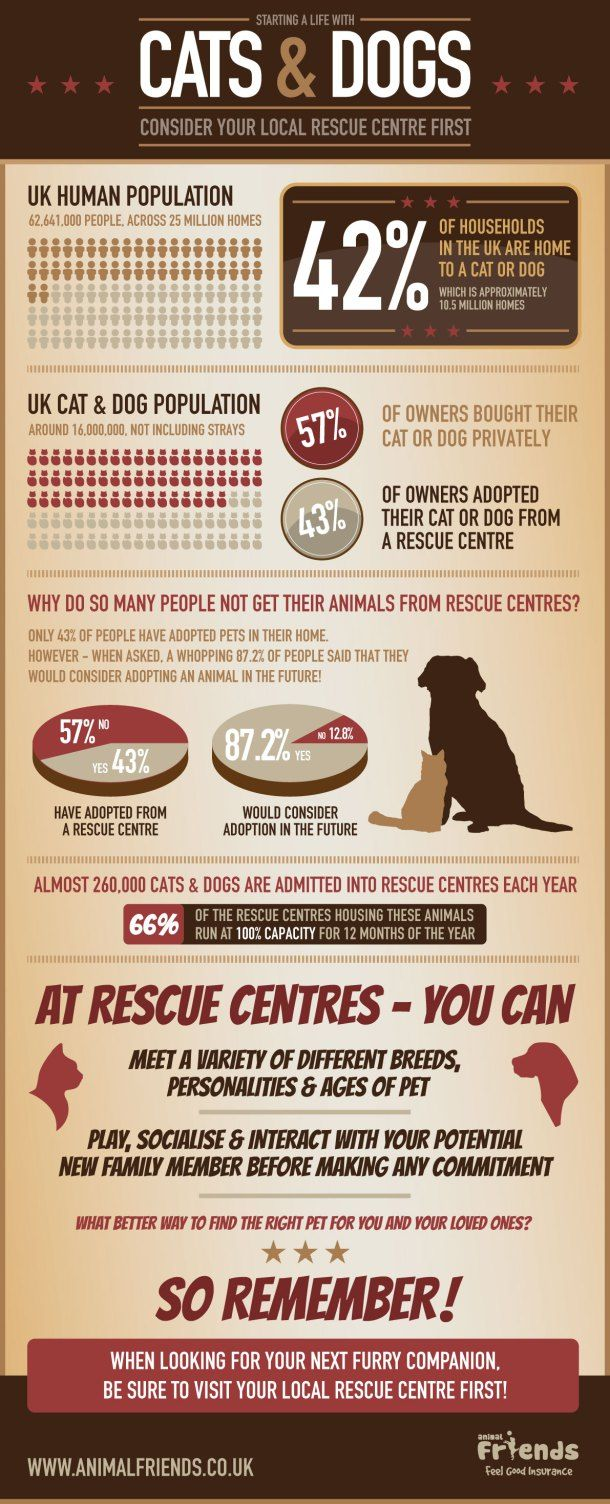 Starting A Life With Cats And Dogs Consider Your Local Rescue Centre First Infographic Dog Infographic Dog Cat Infographic
