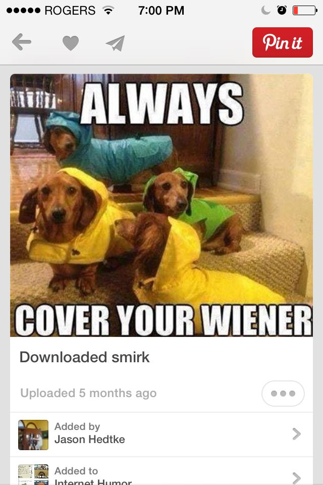 Weiner dog idea of protection
