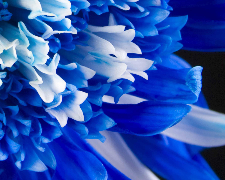 blue flower wallpaper 2019 Blue flower wallpaper, Blue