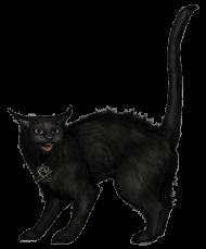 Download Creepy Black Cat Png Images Background Png Free Png Images Black Cat Cats Creepy