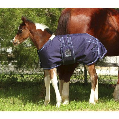 Eous Heavy Weight Foal Rug And