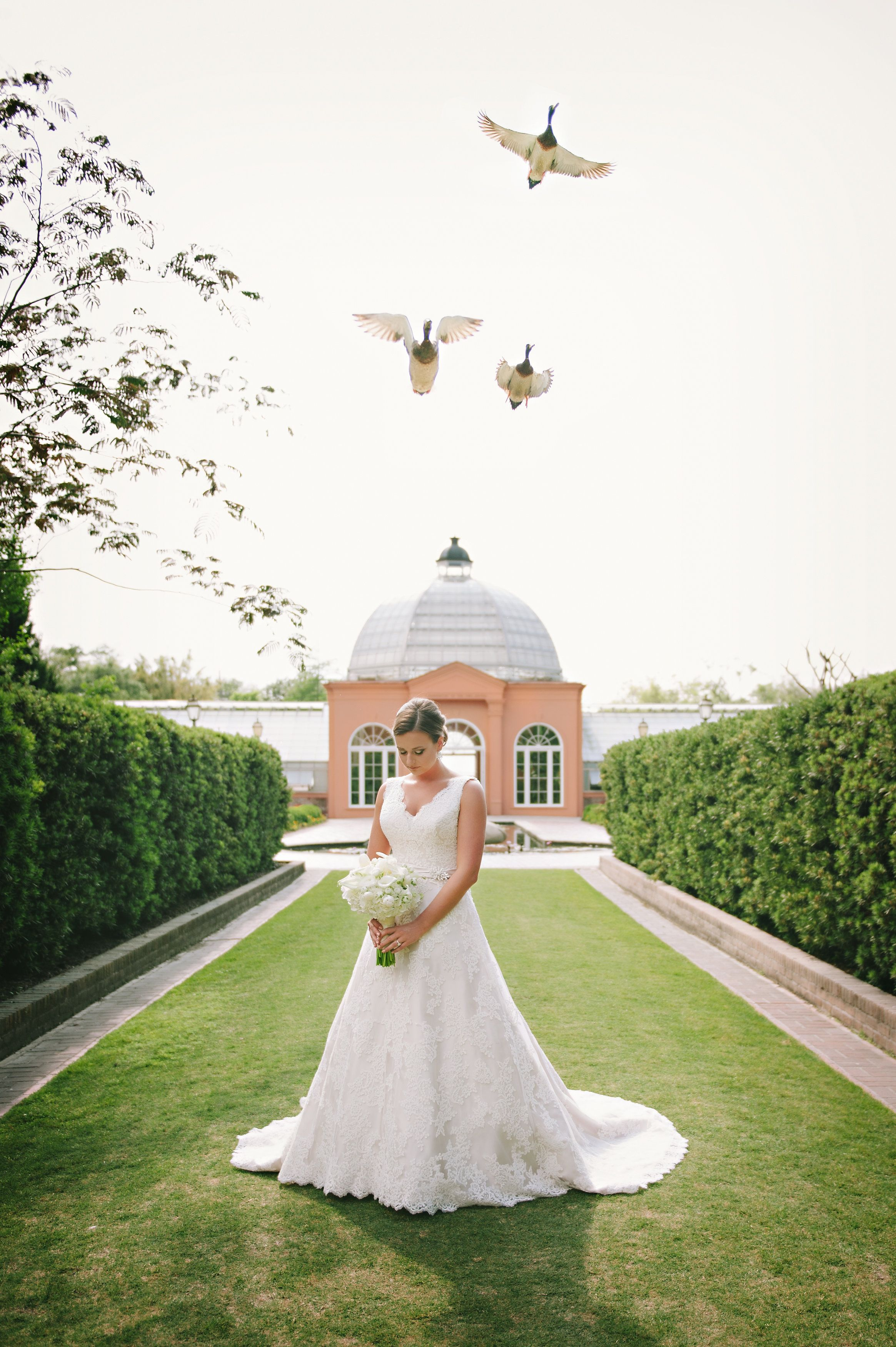 New Orleans City Park Conservatory Wedding At Night Google Search