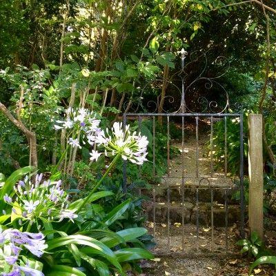 Wonderful tips on reviving your garden from Australian garden expert Stephen Ryan - interesting wherever your garden is!