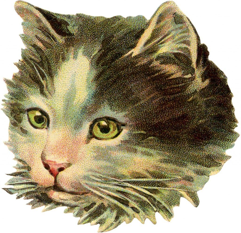6 Vintage Cat Images Free Scraps Cat Illustration Vintage Cat Cats Illustration