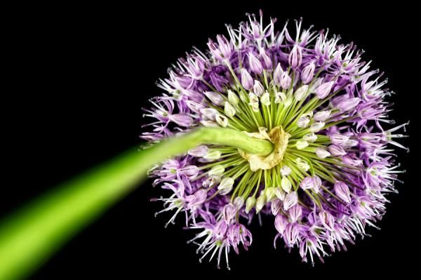 Photography by Mark Johnson   flowers  dew