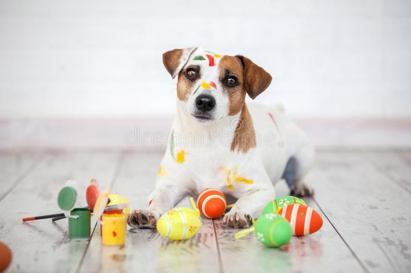 Dog With Painted Easter Eggs One Pet At Home Affiliate Easter Painted Dog Home Pet Ad Dogs Easter Eggs Easter Egg Painting