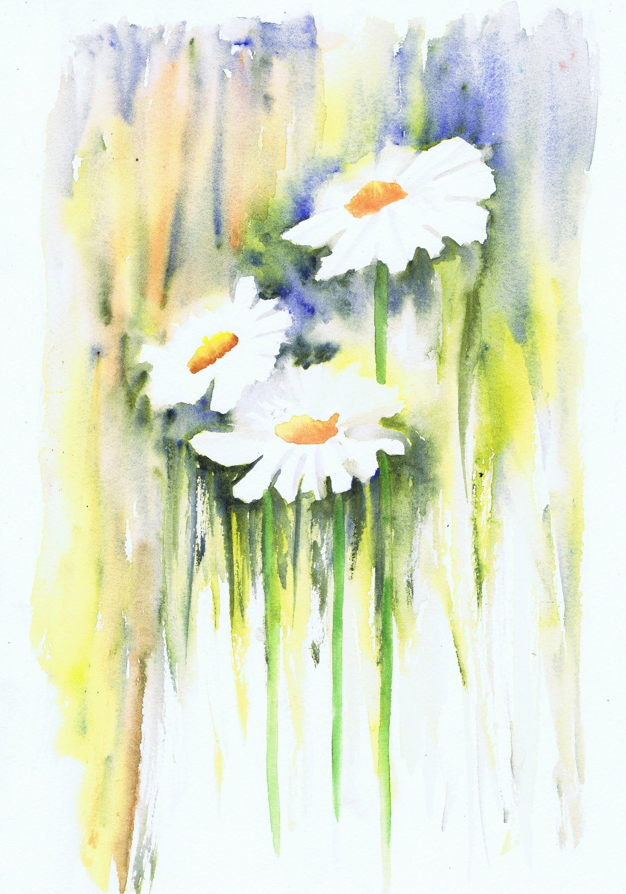 цветы ромашки картинки акварель его