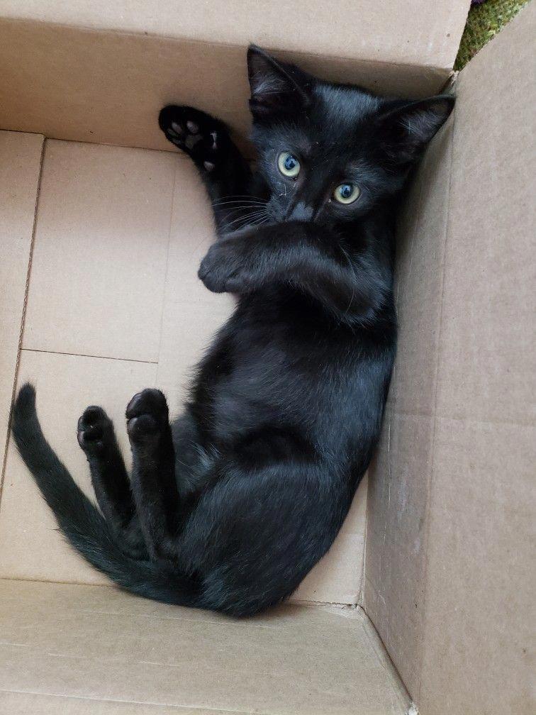 How To Draw Cute Animals Dog Cute Animals Cute Black Kitten Cute Baby Animals