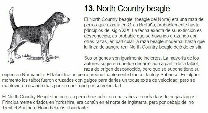 Perros extinguidos