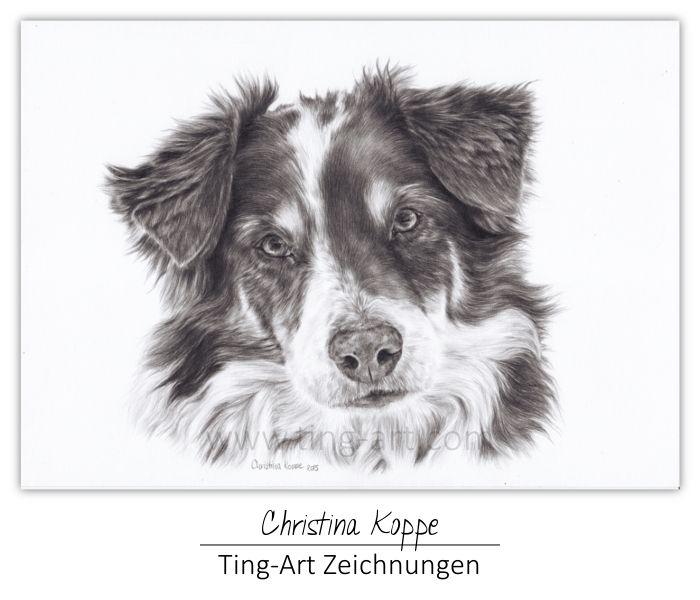 Www Ting Art Com Aussie Australian Shepherd Drawing Zeichnung Hundezeichnung Hundezeichnung Zeichnungen Bleistiftzeichnung