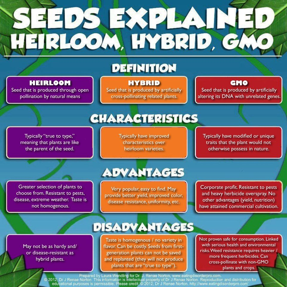 Gmo Vs Hybrid Promoters Of Gmo Agriculture And Those In The