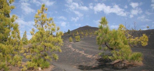 Senderismo en la isla de la Palma Ruta de los Volcanes