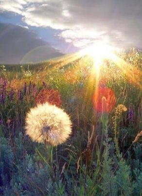 Sunrise # nature #