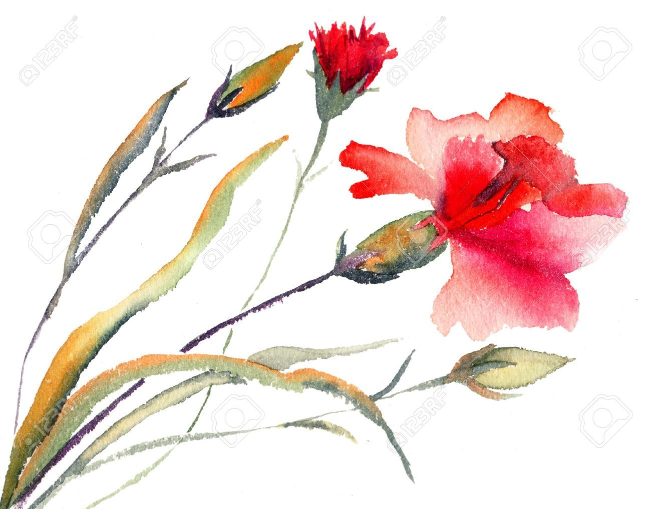 Related Keywords Suggestions For Watercolor Single Flower