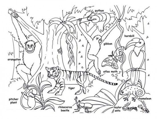 Rainforest Animals For Kids Printable Rainforest Animal Coloring