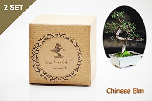 Gardening  Set of 2 Chinese Elm Bonsai Seed Kit Gift  Complete Kit *** This gardening item can be found by clicking the VISIT button