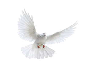Pigeon Png Images Free Pigeon Png Pictures Download Holy Spirit Dove Clip Art Png Images