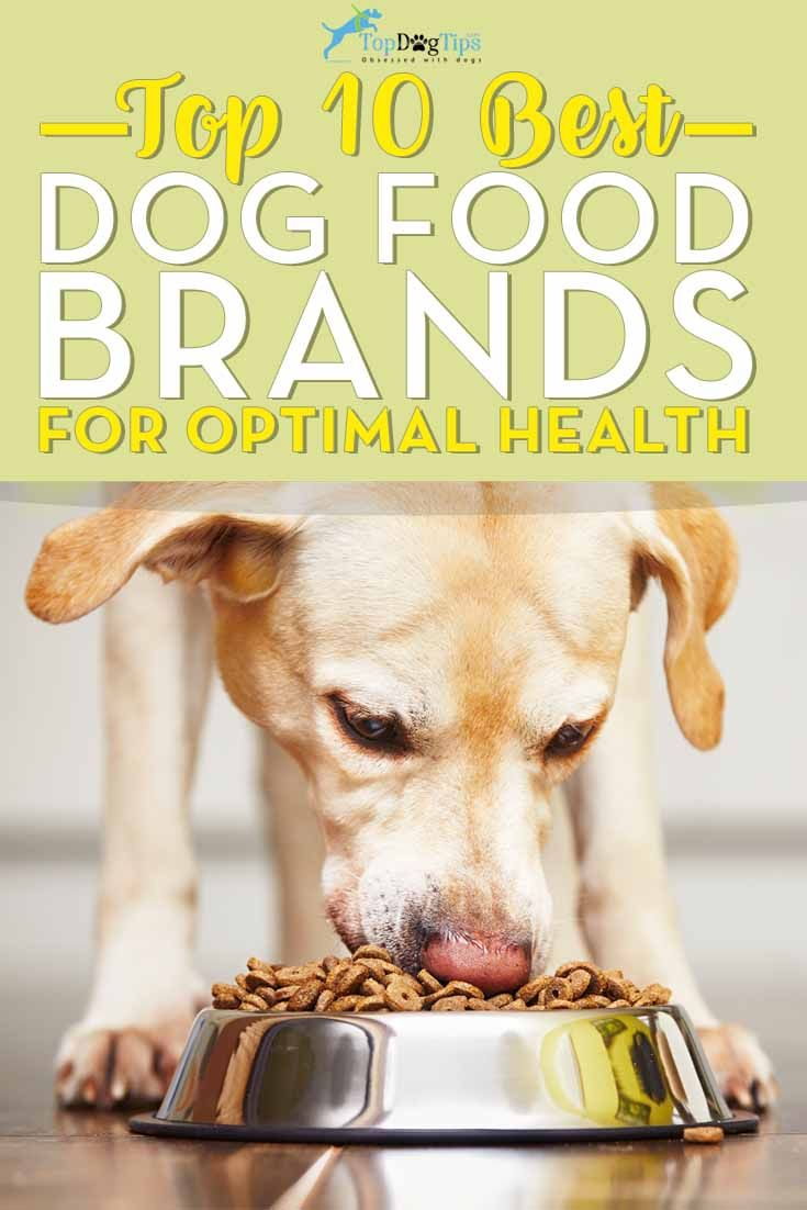 Best Dog Food For Labs >> Top 10 Dog Foods 2018 What Is The Best Dog Food Brand Today Best