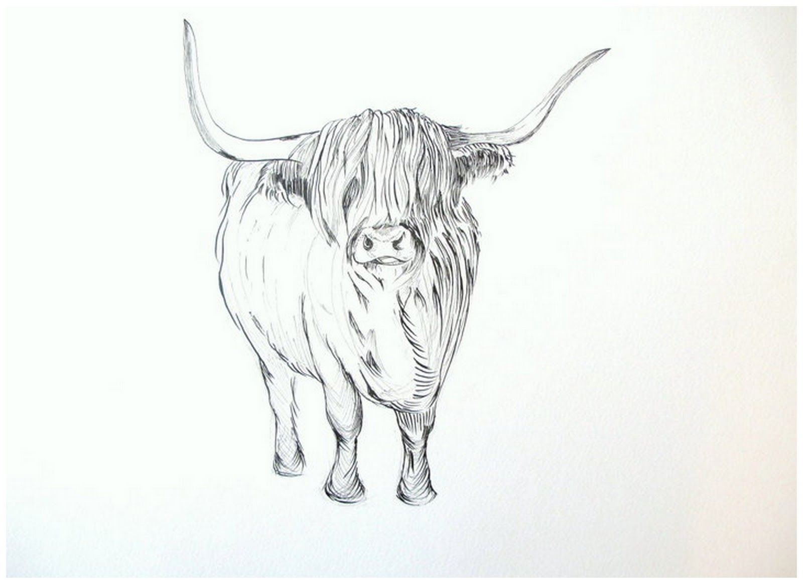 Line Drawing Cow Face : Highland cow bovine pinterest hornberg bücher
