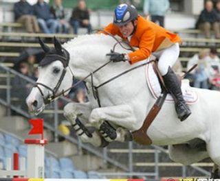 | Berlin - warmblood stallion