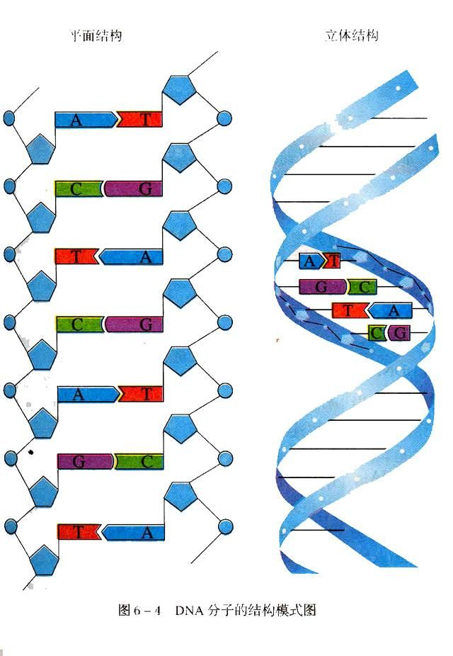 Dna bing images dna pinterest dna bing images ccuart Image collections