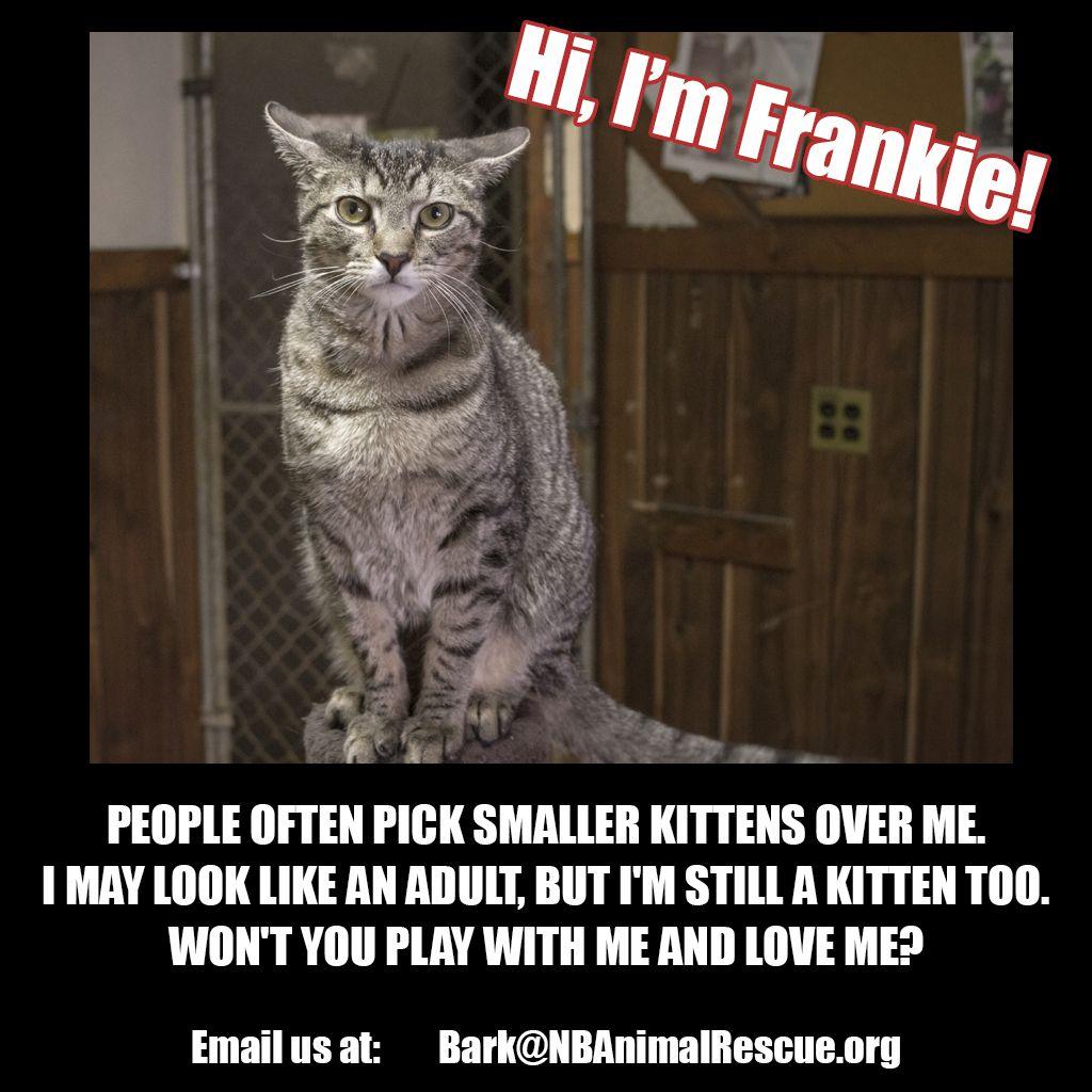 Frankie is still a kitten though he looks older. He's a