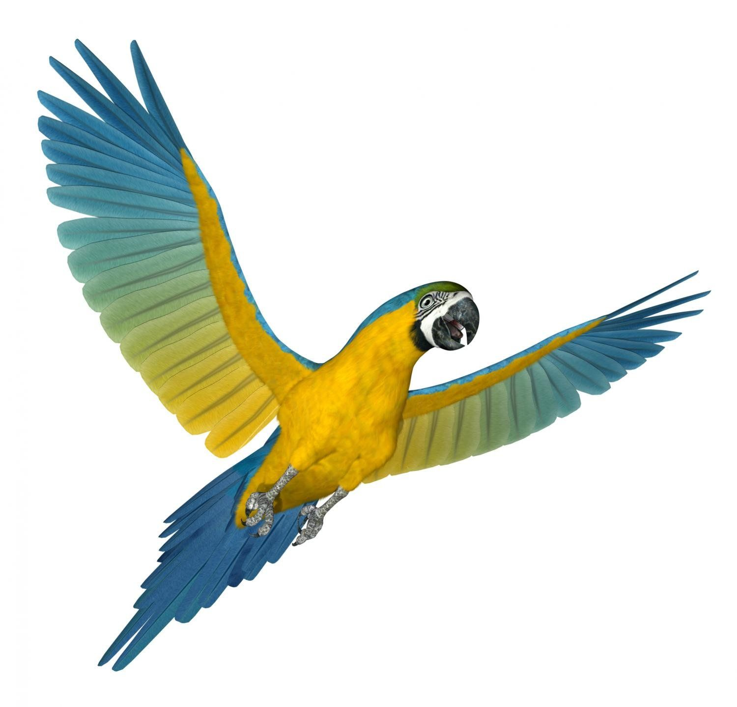 Amazon.com - Animal Wall Decals Blue and Gold Macaw Flying 2 - 18 ...