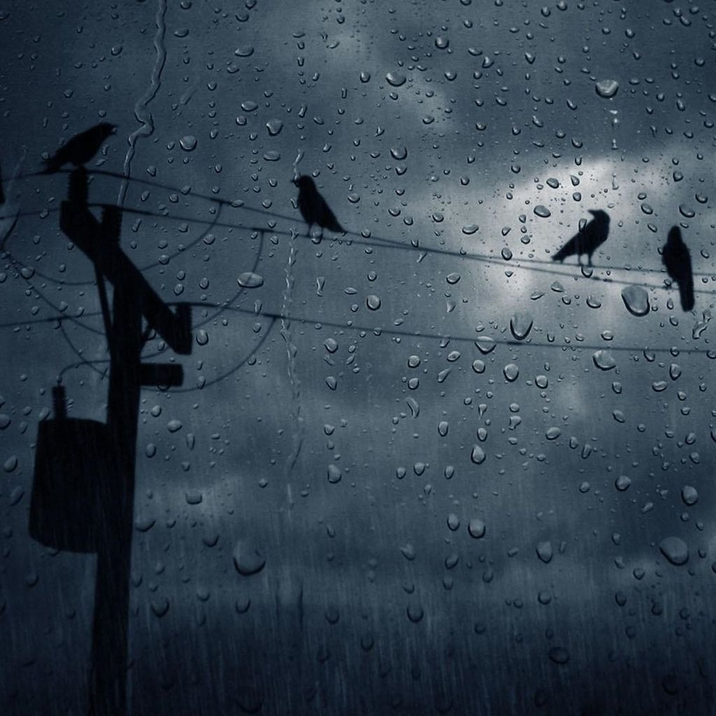 Birds In Rain Looking Out Window On A Rainy Day Rain Wallpapers Inspirational Quotes Pictures Rain Photography