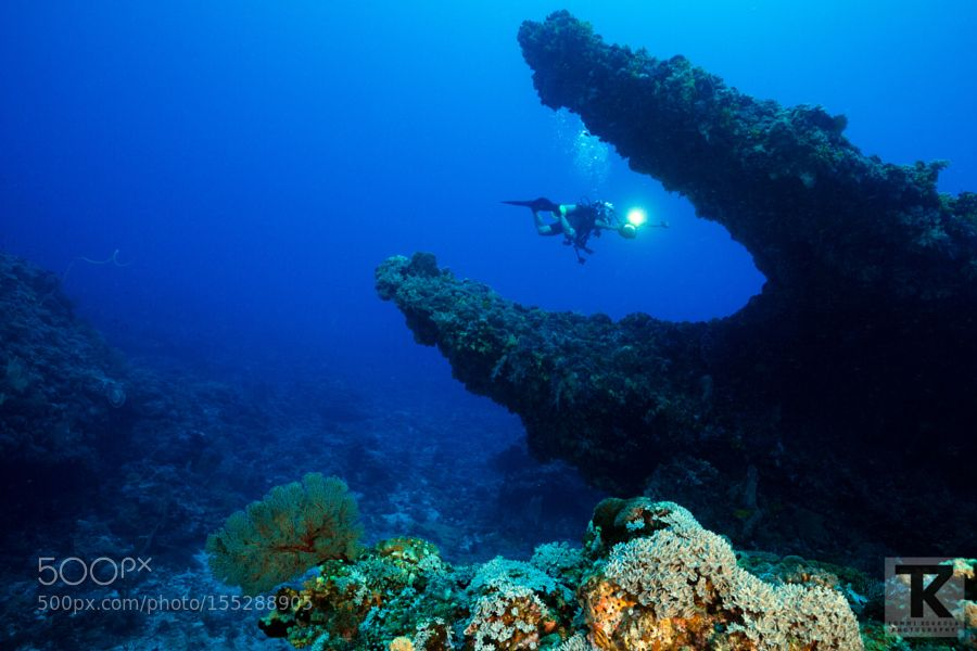 """Diver in crocodile's mouth Go to http://iBoatCity.com and use code PINTEREST for free shipping on your first order! (Lower 48 USA Only). Sign up for our email newsletter to get your free guide: """"Boat Buyer's Guide for Beginners."""""""