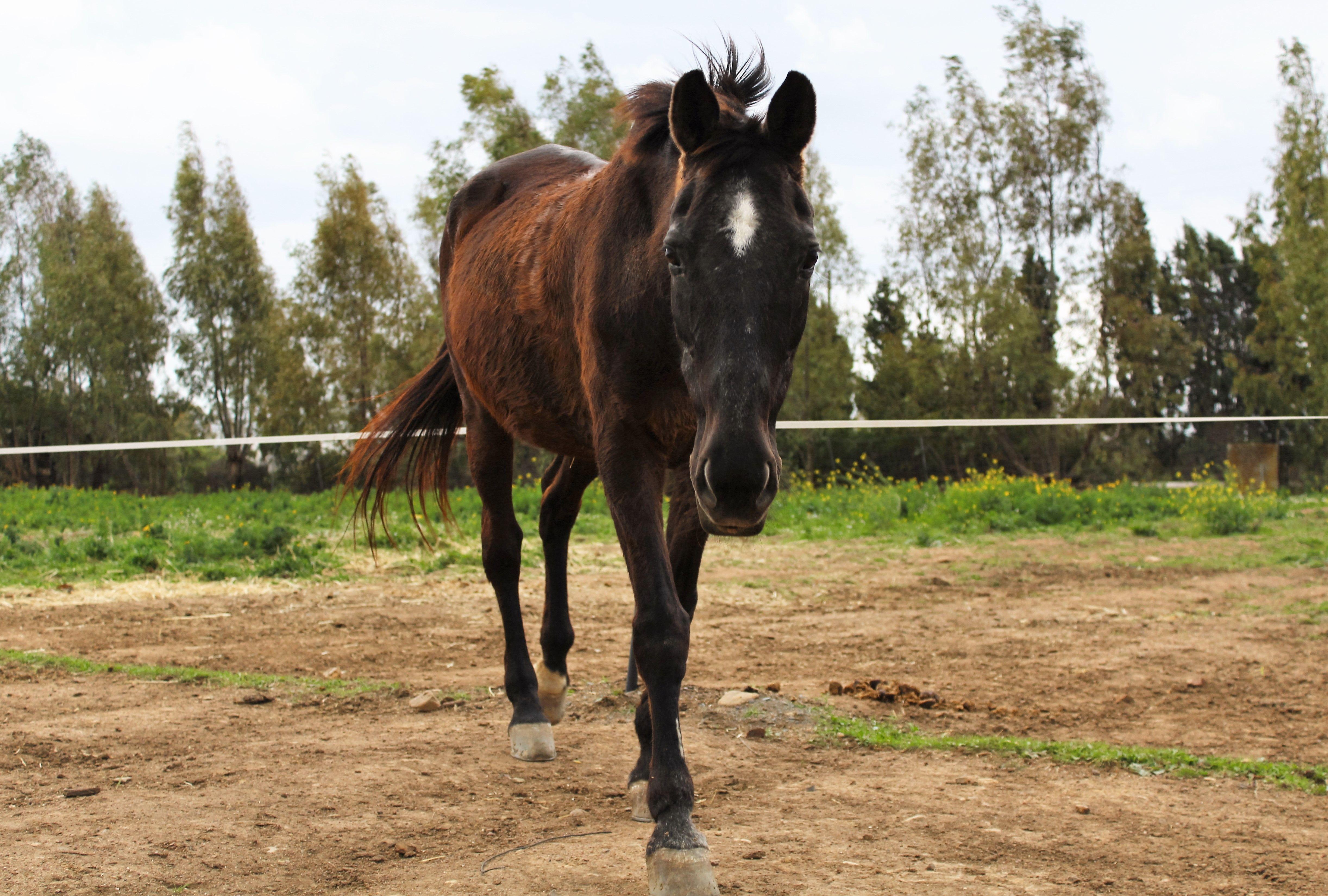 URTULA - la più anziana del gruppo, bravissima con i cavalieri non molto esperti.