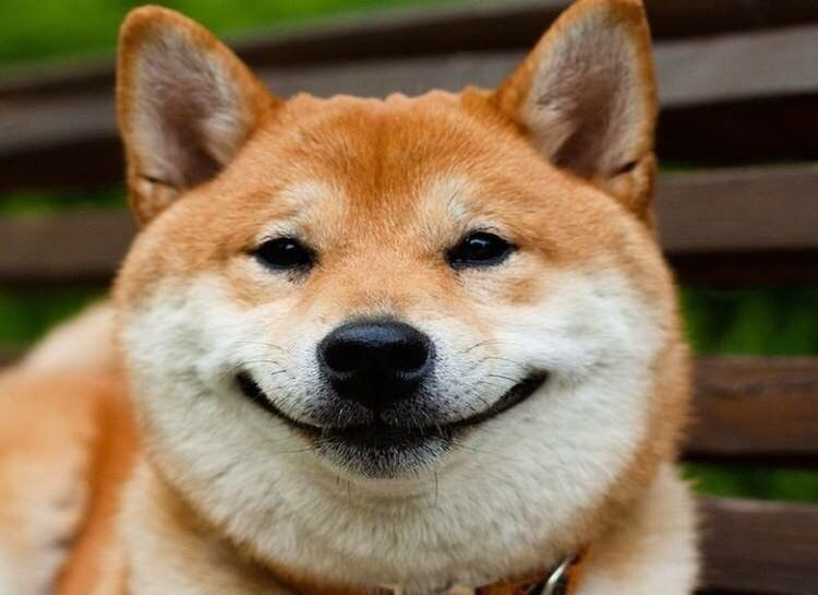 А чё вы такие грустные все собаки?))