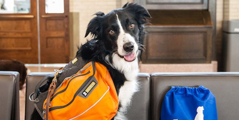 Building Dog Confidence In New Situations Pets Animals Dogs