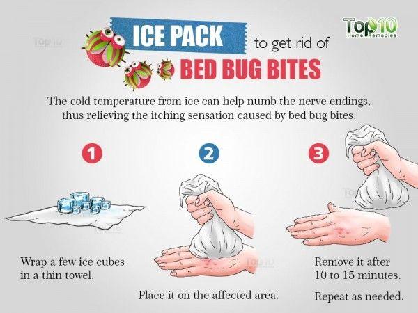 344ce87cede6af0de697557486d6b4a7 - How To Get Rid Of Bugs Biting Me At Night
