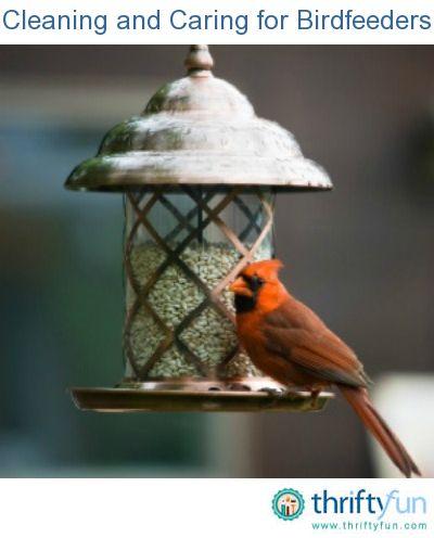 Cleaning And Caring For Birdfeeders Bird Feeders Backyard Birds Bird