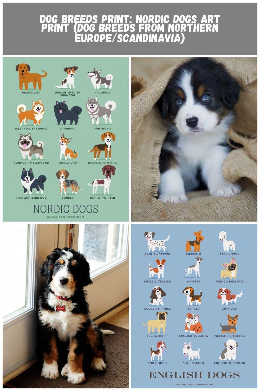 Dog Breeds Dog Breeds Print Nordic Dogs Art Print Dog Breeds From Northern Europe Scandinavia Dog Print Art Dog Art Dog Breeds