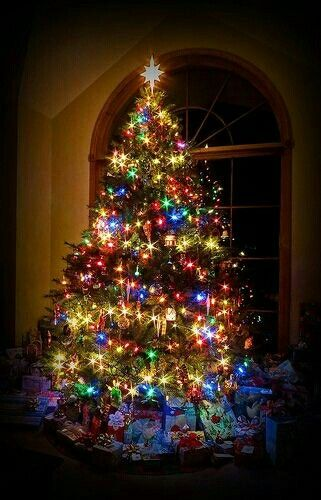 White And Multi Coloured Lights Together On One Tree