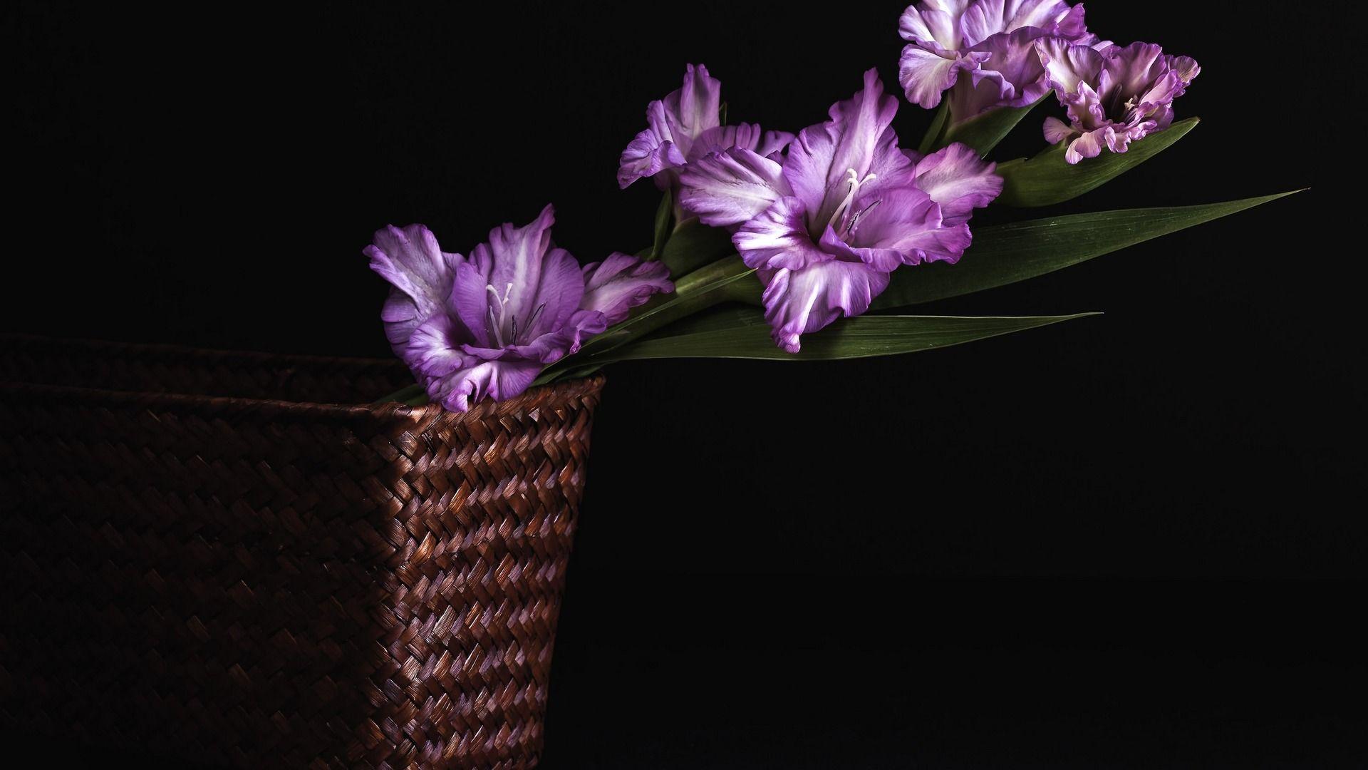 Gladiolus Flower Drawing Download Gladiolus 1920x1080 Wallpaper Purple Flowers Purple Flowers Wallpaper Gladiolus Flower