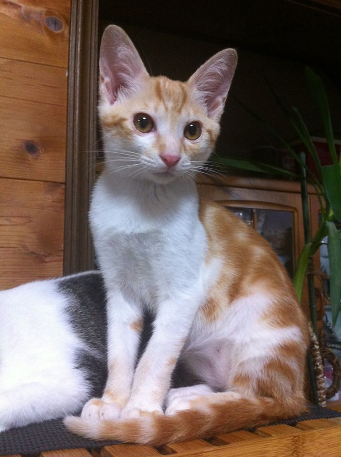 うちの猫あまりに可愛すぎるから自慢するwww:ハムスター速報
