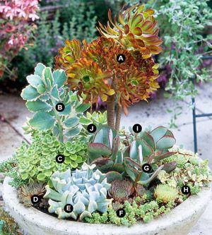Drought Tolerant Succulent Container Garden Plans