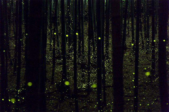 Long exposure photos of fireflies by Yume Cyan