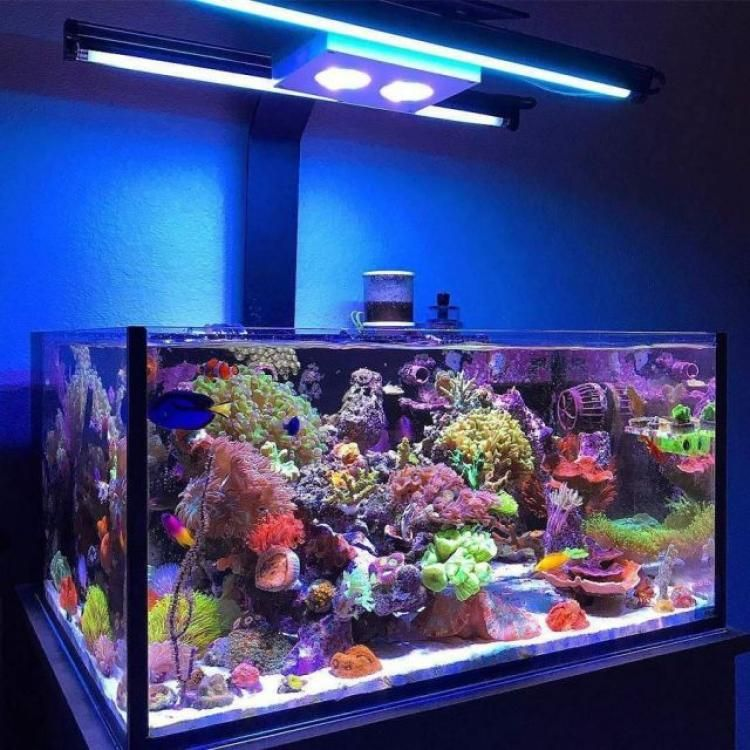 100+ Awesome Aquascape Gallery Ideas that You Never Seen ...
