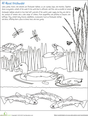 Color the Freshwater Habitat science Science