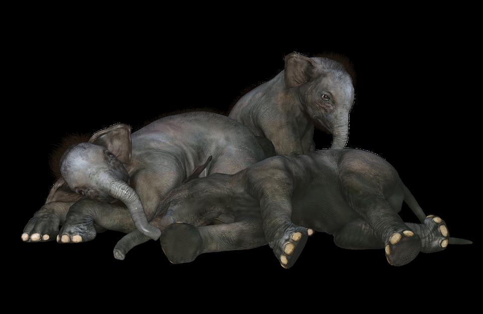 Free Image on Pixabay Elephant, Baby Elephant Wild
