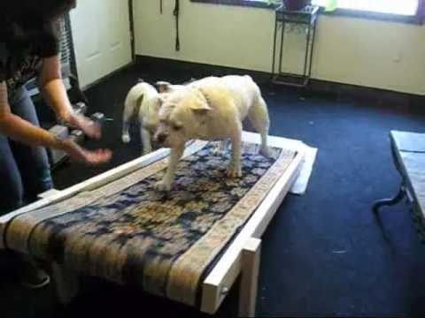 Pin On Doggie Treadmill