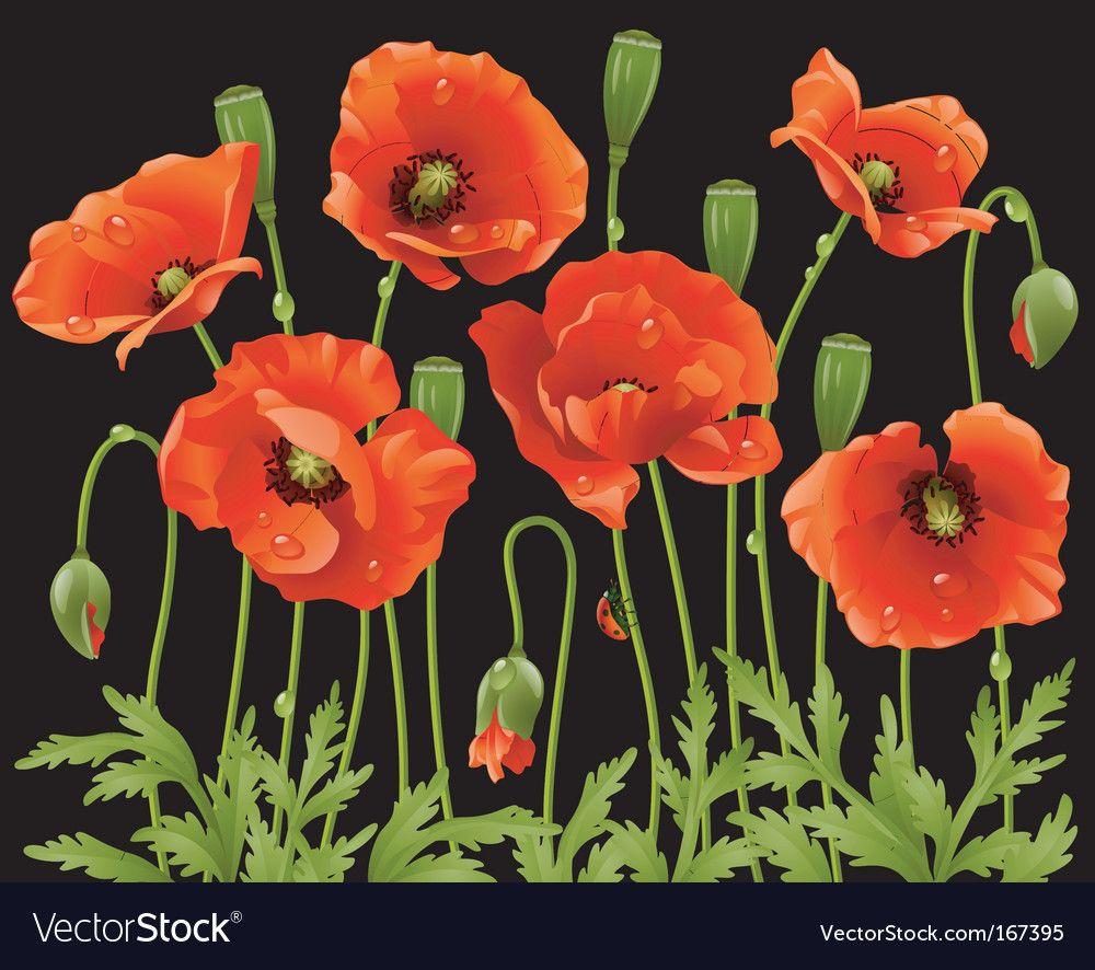 Spring flowers poppy vector image on, 2020 Resim