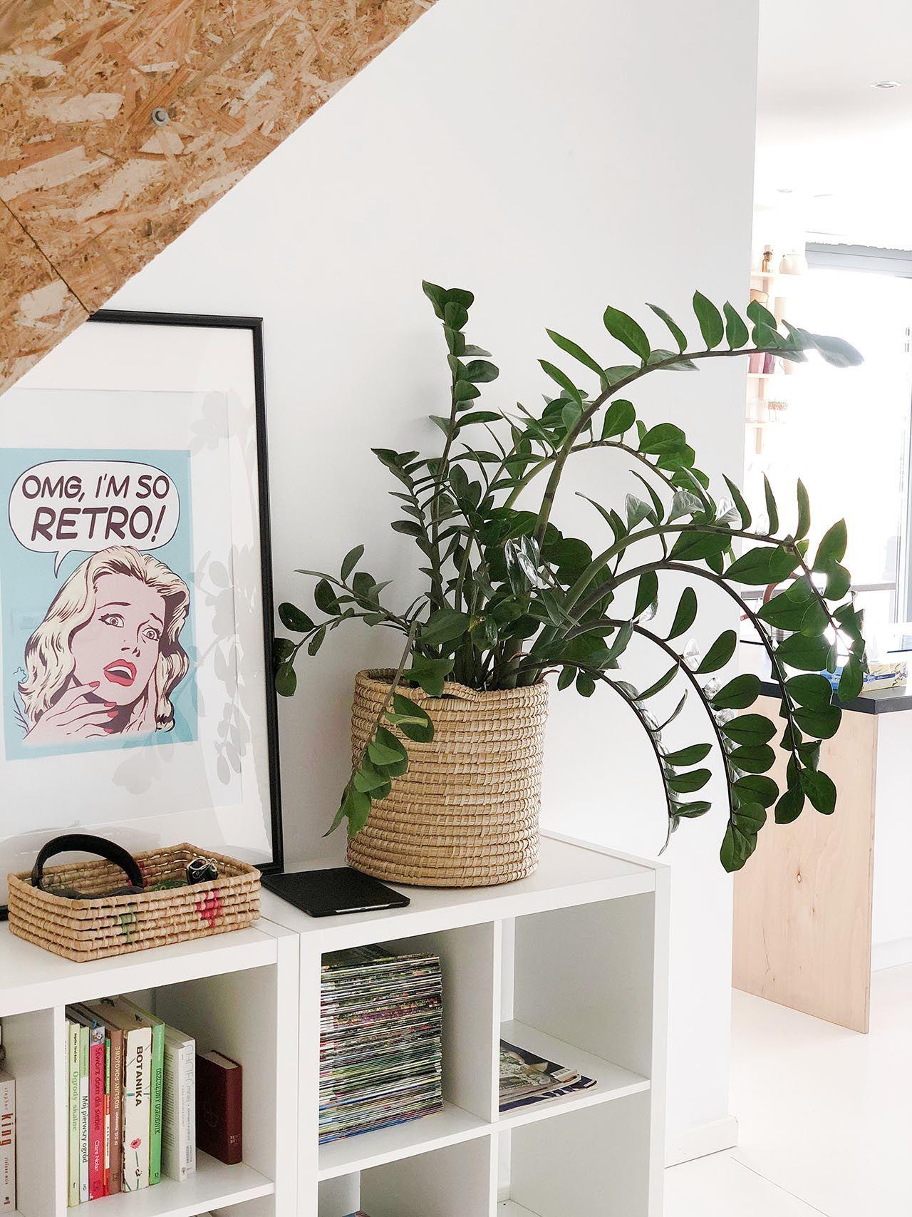 Https Basiaszmydt Pl Kwiaty Doniczkowe W Moim Domu Home Decor Decor Plants